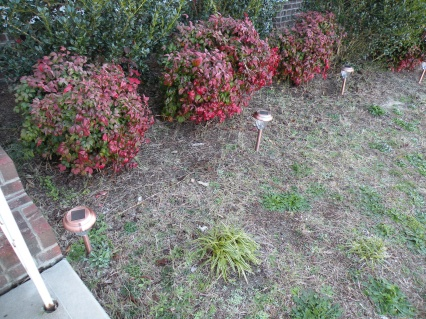 What is the best way to clean up these flower beds for new mulch?-001.jpg