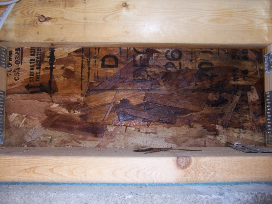 What do i do about water at the rim joist building - What to do about mold ...