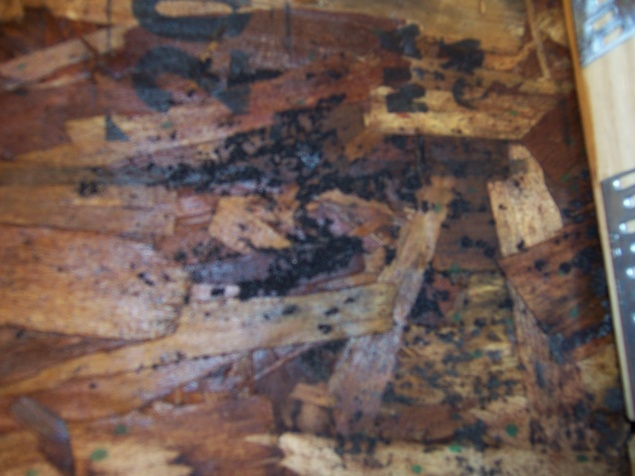 What do I do about water at the rim joist?-01-31-09_black-mold-rim-joist-beneath-porch_0003.jpg