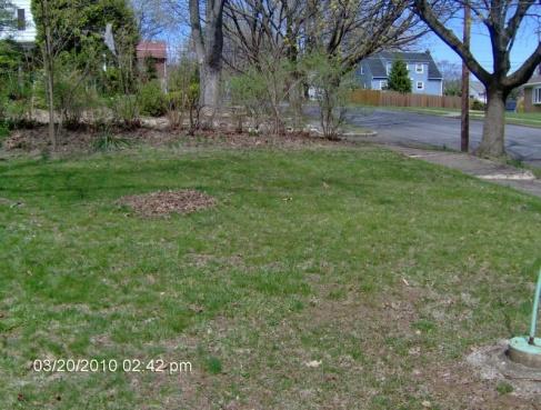 Desperate lawn-011.jpg