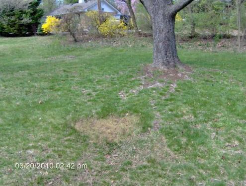 Desperate lawn-012.jpg