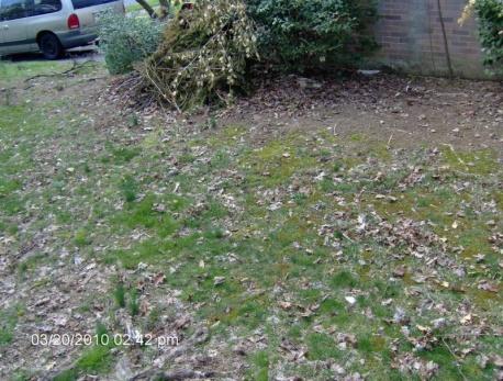 Desperate lawn-013.jpg