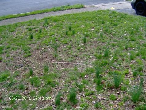 Desperate lawn-015.jpg