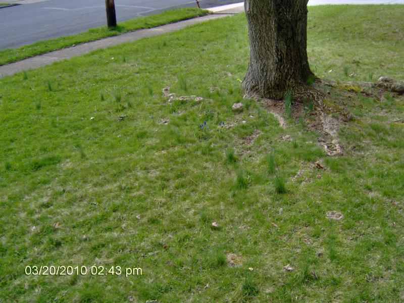 Desperate lawn-016.jpg