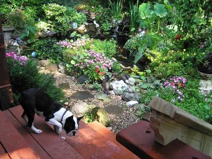 Garden Decoration!-018.jpg-pond-rev-7-11-11.jpg