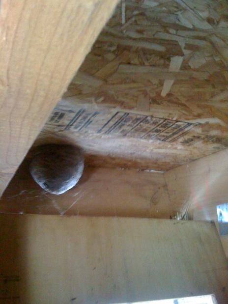 beehive in attic-03222010iphone-025.jpg