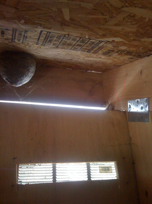 Beehive In Attic Pest Control Diy Chatroom Home