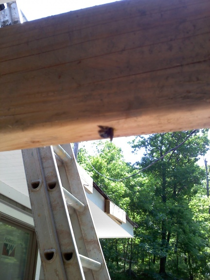 Uhh... What drilled a hole my deck?-0531111124.jpg