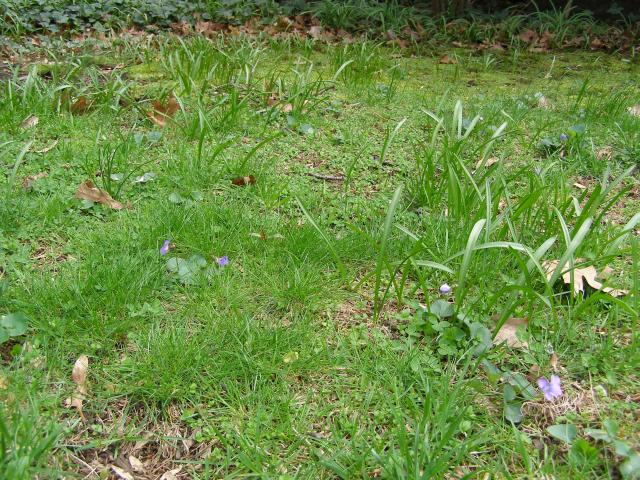 What the hell happened to my lawn? (also: reseeding when weeds are present. N.Y.)-069.jpg