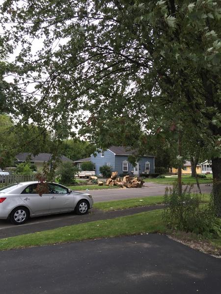 Tree Sap on Car Attracting Bees, Cut?-1.jpg