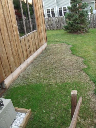 Trouble Growing Grass-1.jpg