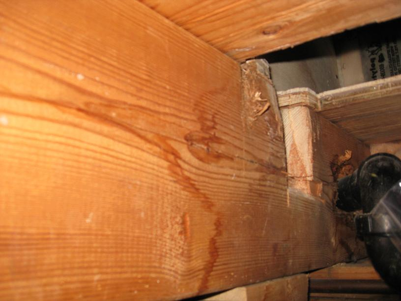 Floor Joist Notch-1.jpg