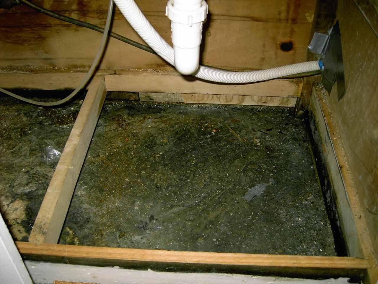 Black Mold In Kitchen Mold Under Sink Plumbing Diy Home Improvement Diychatroom