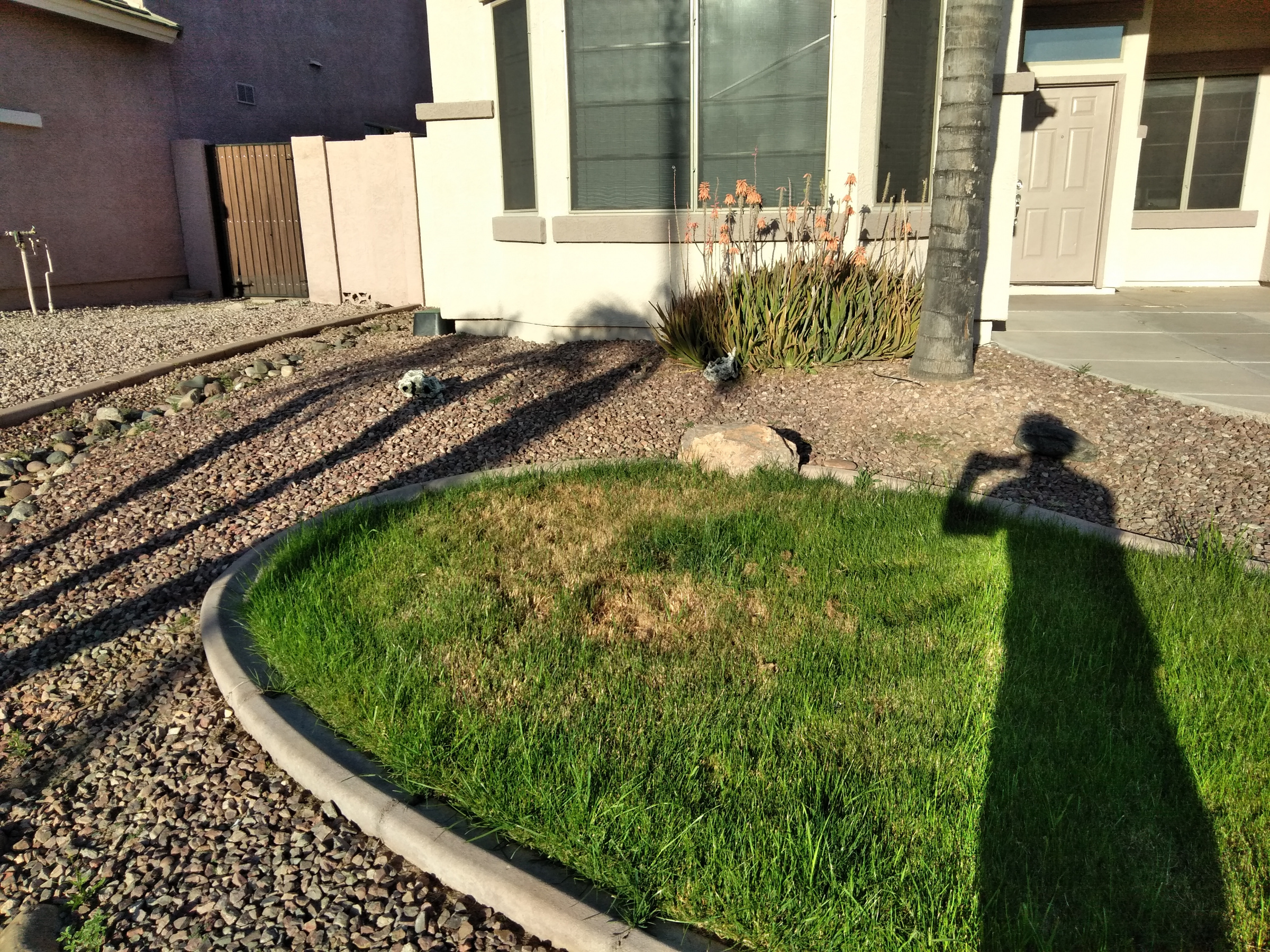Lawn with a patch of dead/???-1.jpg