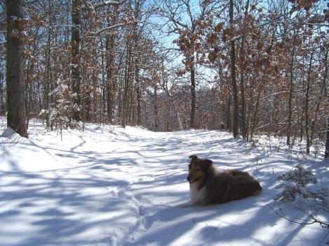 Snow-100_0096a.jpg