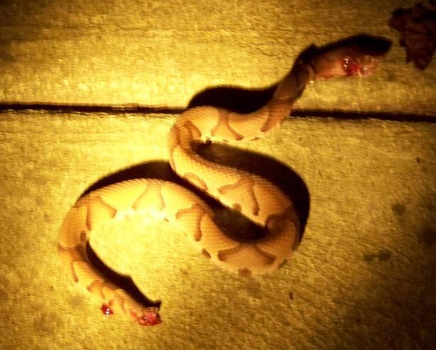 Snake in the house.-100_0832.jpg
