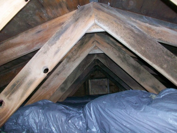 Roof venting on colonial with no soffit-100_3156.jpg
