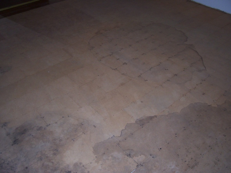 Flooring Under Carpet-100_5978.jpg