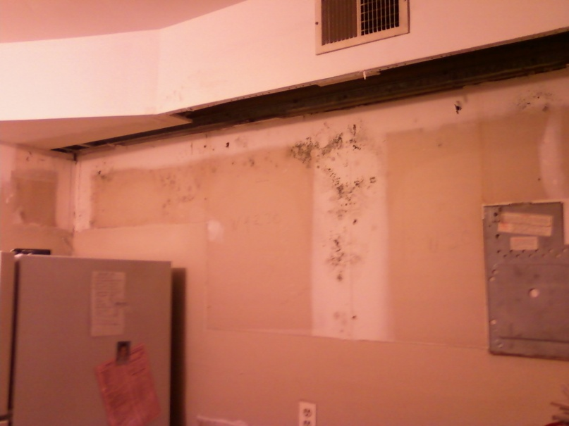 Mold behind cabinets, no drywall above-1012122019.jpg