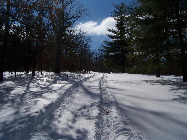 Snow-101_0510.jpg