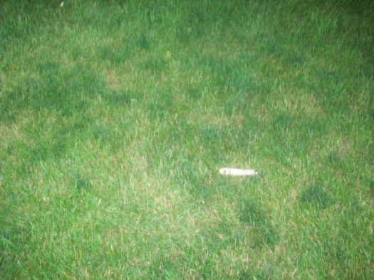 Dark green spots on lawn-102_0353.jpg