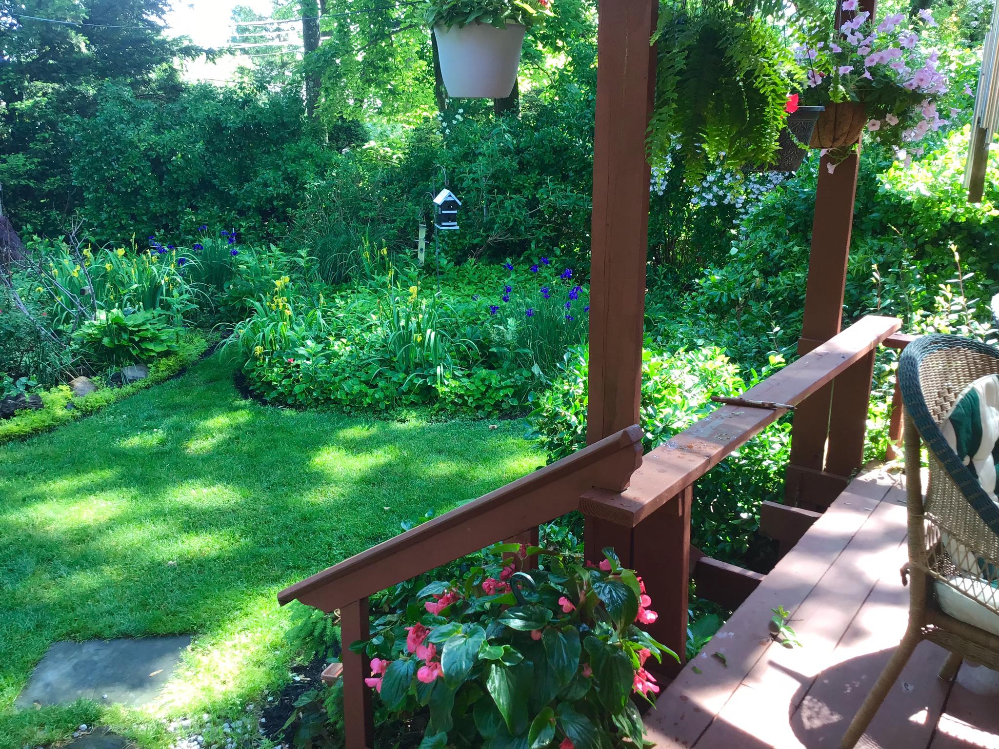 This mornings garden-10a06789-dcb8-4541-b9de-752dc507874a.png