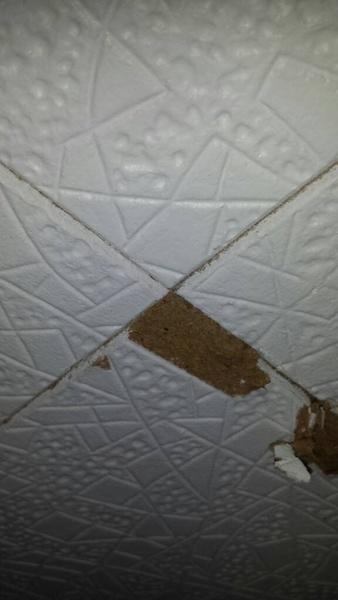 Ceiling tiles-1427390173103.jpg