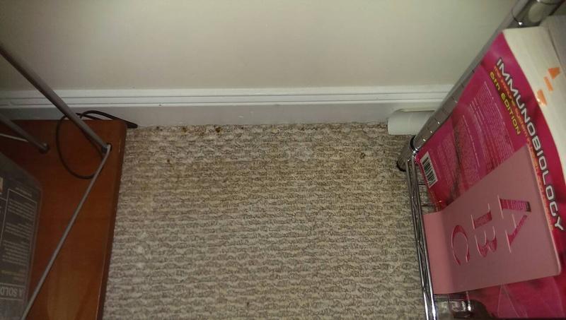 Mold Behind The Drywall Drywall Plaster DIY Chatroom Home - Mold behind drywall in bathroom