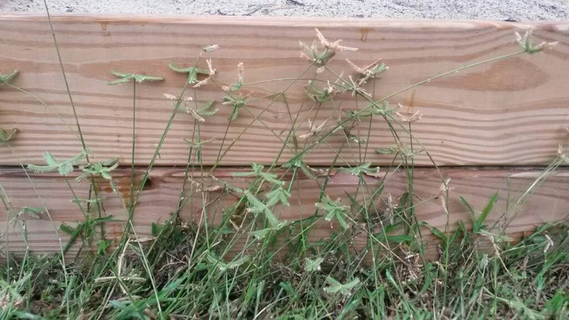 Grass/weed help-1442091985441.jpg