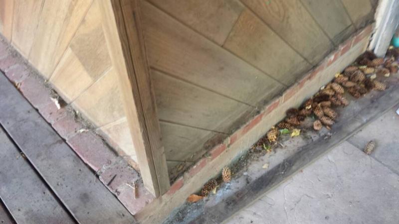 Enclosed entryway is leaking how to seal?-1475080261408.jpg