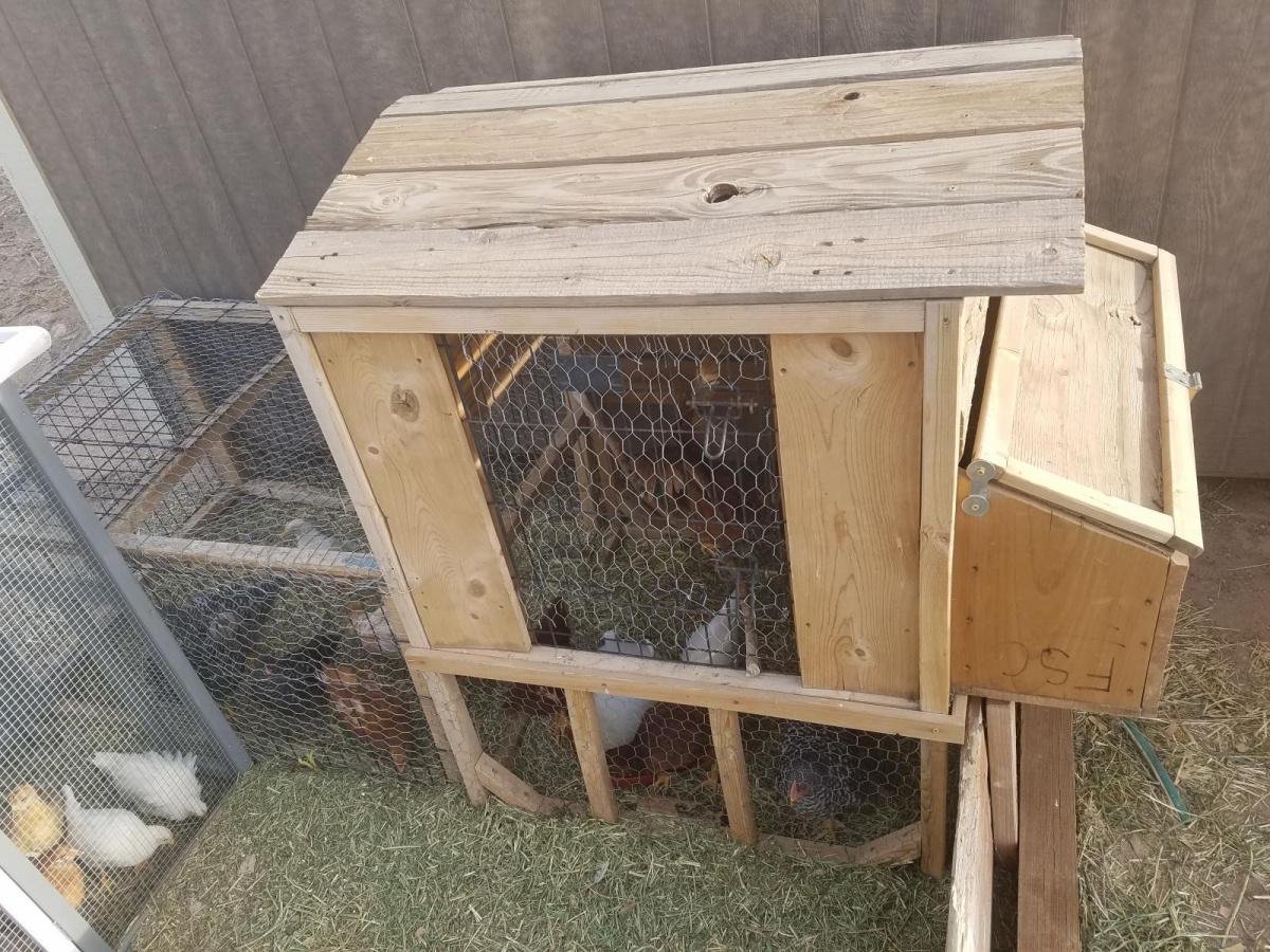 Building BIG chicken coupe.-15235417746181493712454_1523541785107.jpg