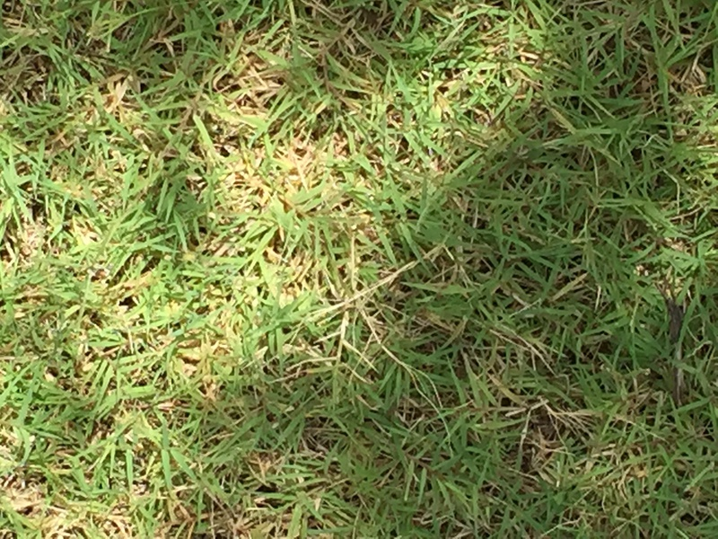 Which Type of Grass-1554.jpg