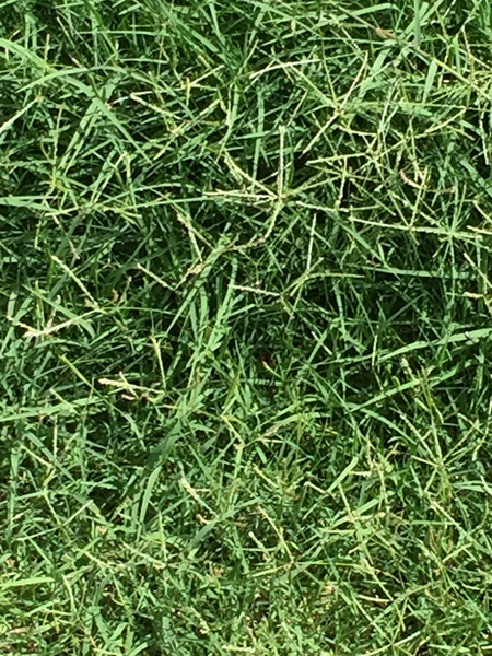 Which Type of Grass-1555.jpg