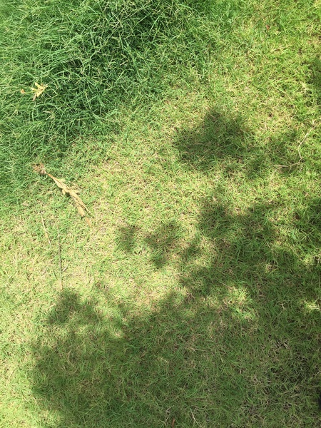 Which Type of Grass-1556.jpg