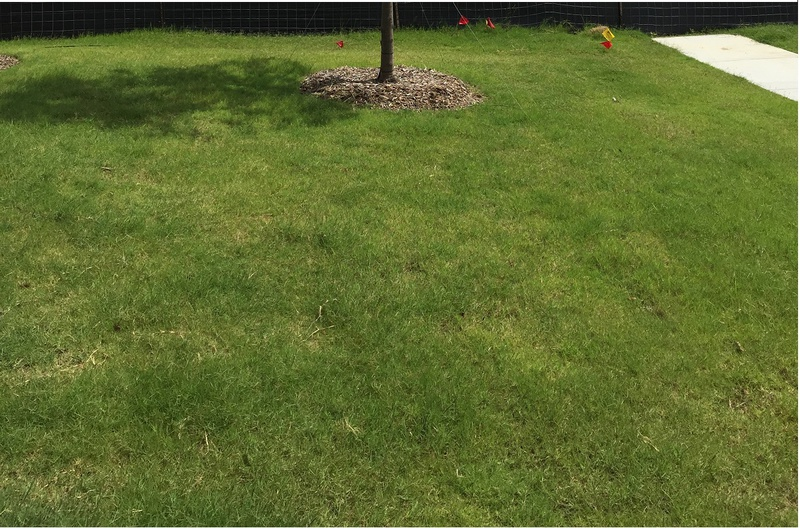 Which Type of Grass-1557.jpg