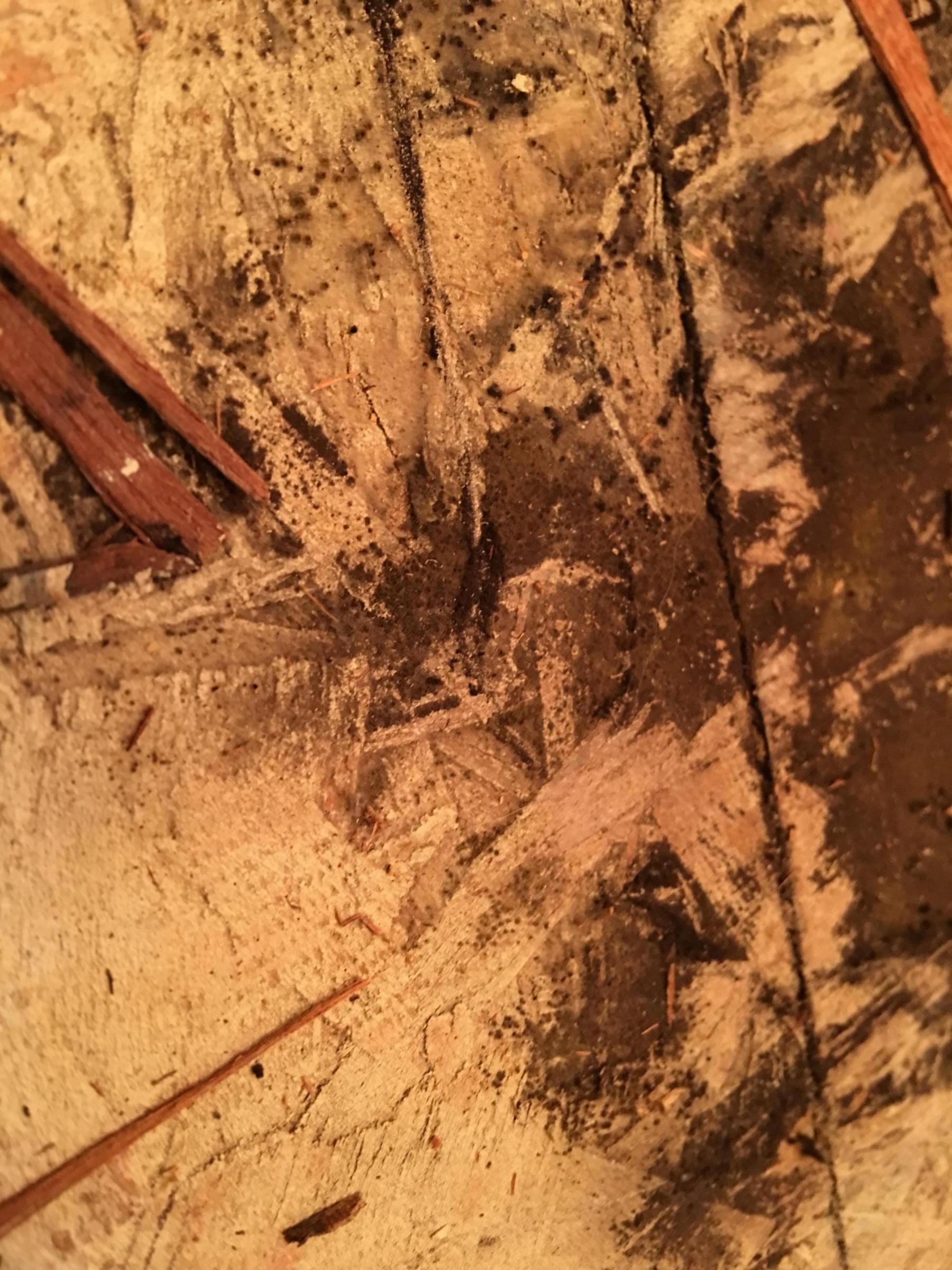 Ripped up bathroom floor found black mold?-168dc587-4026-4a96-8b2a-c69e80679963_1542423235065.jpg