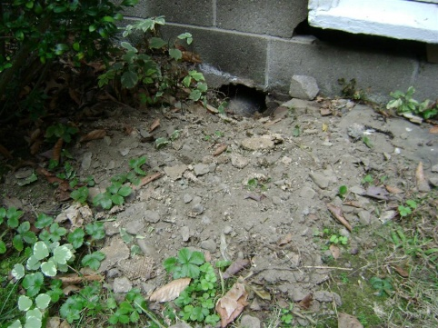 Bizarre hole in foundation after wasp spraying-2.jpg