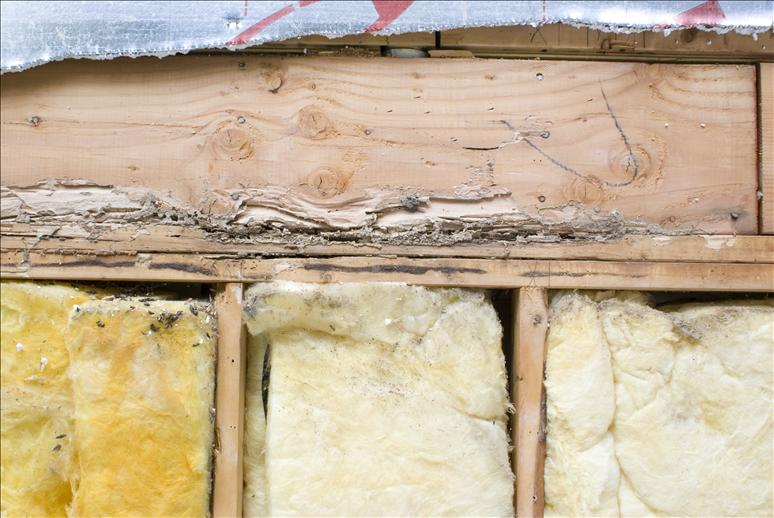 How To Fix Termite Damage Building Amp Construction Diy