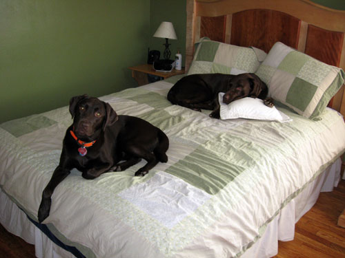 adding a load-bearing wall-20081229_dogsonbed.jpg