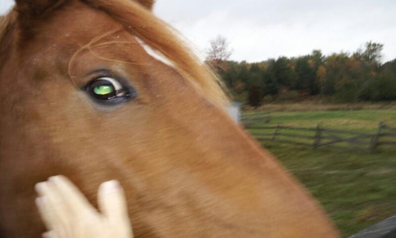 horses-2012-10-10-09.38.32.jpg