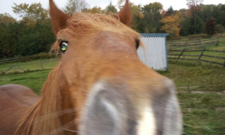 horses-2012-10-10-09.39.20.jpg