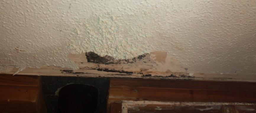 Moldy drywall-2012-11-14_23-26-15_761.jpg