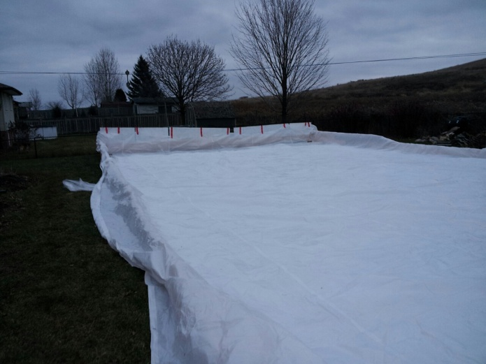 Backyard skating rink-2012-12-14-18.00.19.jpg