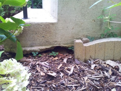 Dirt erosion underneath concrete front steps, fill with gravel?-20120709_165207.jpg