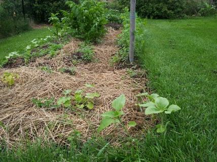 A little garden how-to-20130610_132135.jpg