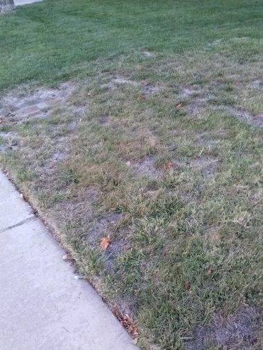 Need help with front lawn-2014-10-18-18.17.15.jpg