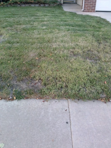 Need help with front lawn-2014-10-18-18.17.25.jpg