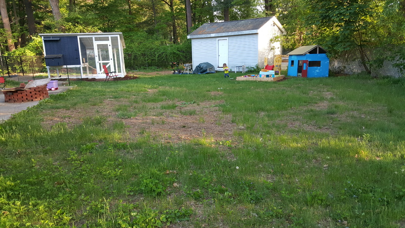 Where do I even start with my lawn.-2015-05-21-19.05.18.jpg