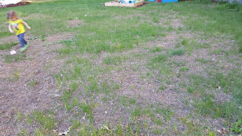 Where do I even start with my lawn.-2015-05-21-19.05.31.jpg