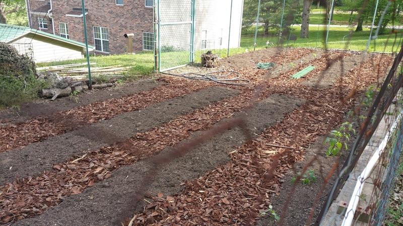 Hey, a gardening forum! We like to grow Veggies-2016-04-18-3-.jpg